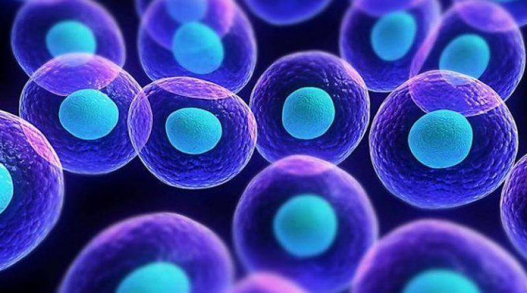 Scoperta in Italia la molecola killer che uccide i tumori