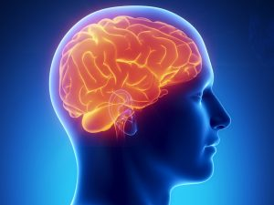L' intestino è il nostro secondo cervello